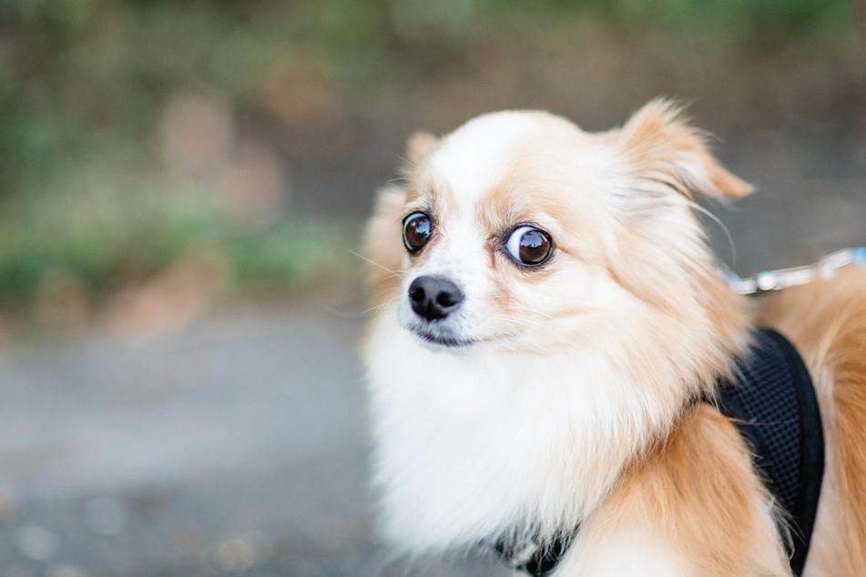 Kurioses Hundegesetz: Hier dürfen Polizisten Hunde beißen