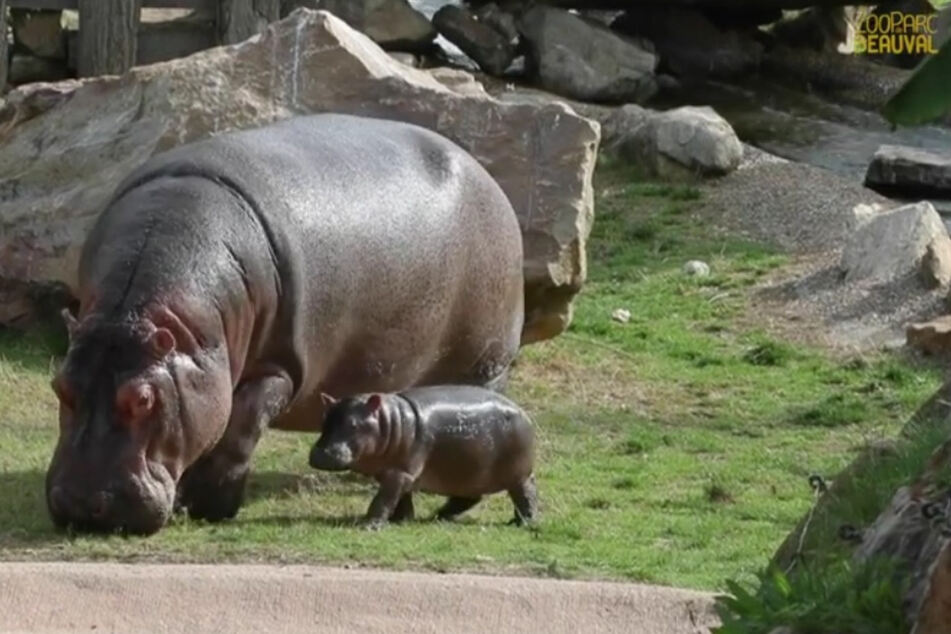 Mama Bolinhas und ihre Tochter Gloria, die schon 38 Kilo auf die Waage bringt.