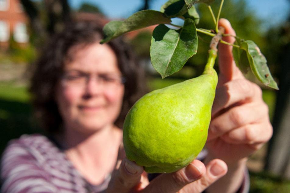 """Umweltwissenschaftlerin Cornelia Bretz hält eine Birne mit dem Namen """"Bardowicker Speckbirne"""" in den Händen. Ihr Verein """"Konau 11 - Natur"""" sucht nach raren und verschollenen Obstsorten."""