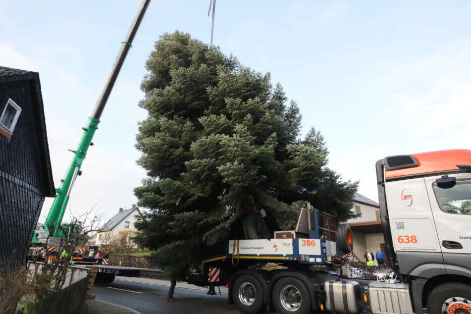 Der Baum wird mit einem LKW nach Berlin zum Brandenburger Tor transportiert und dort als Weihnachtsbaum geschmückt.