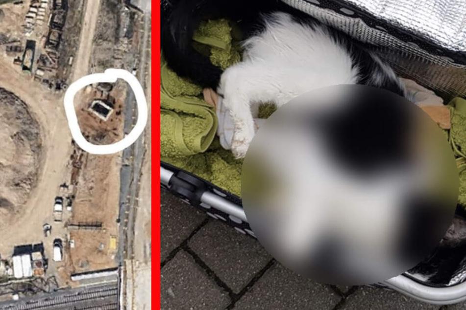Die Katze wurde unweit der neu erbauten Gleis-Brücke in der Landsberger Straße gefunden.