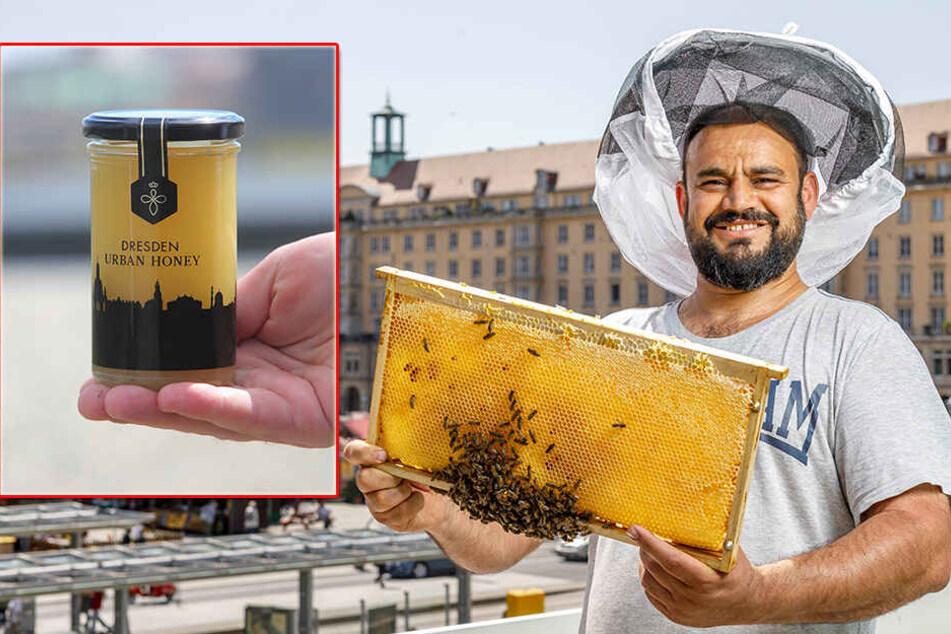 Honig aus Dresden immer beliebter: Wir verraten Euch, woher er kommt, wo es ihn gibt