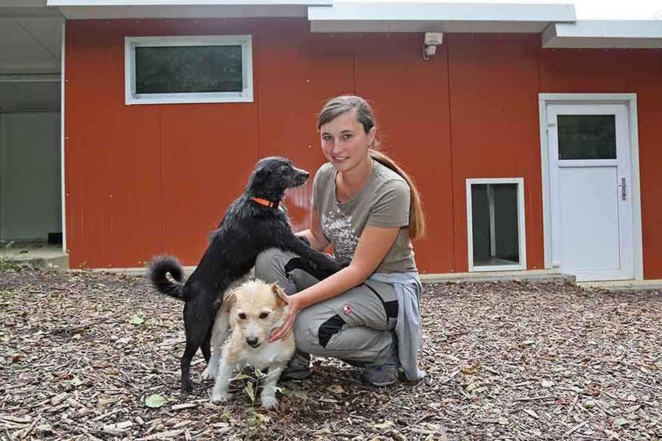 Tierpflegerin Madeleine Thümmel (28) mit den beiden aus einem Zirkus  stammenden Fundhunden Daniel (hell) und Tessa.