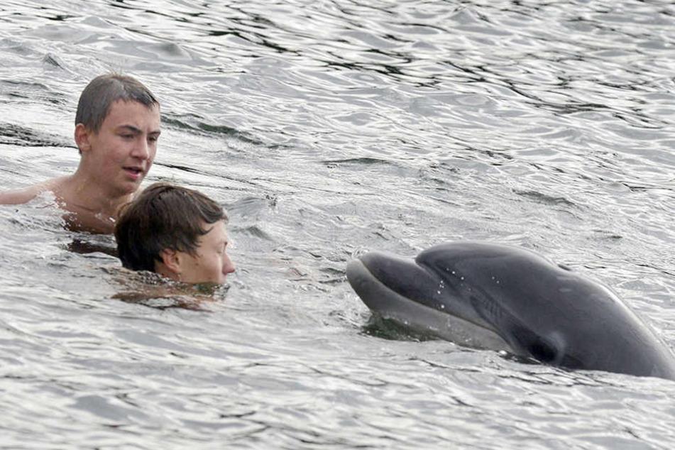 Jugendliche schwimmen in der Kieler Förde gemeinsam mit dem Delfin.