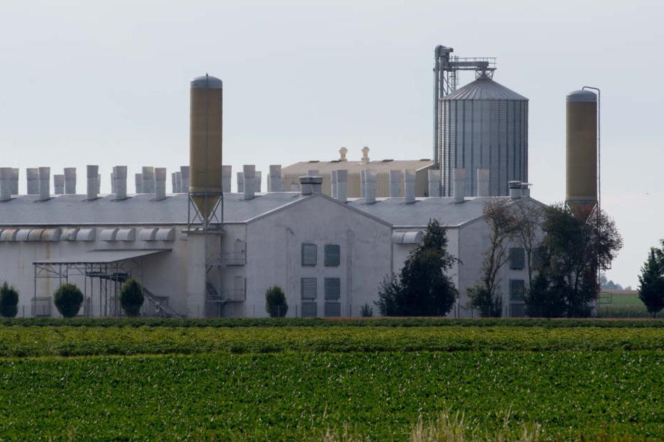 Was passiert mit der leerstehenden Anlange der Firma Bayern-Ei in Aiterhofen?