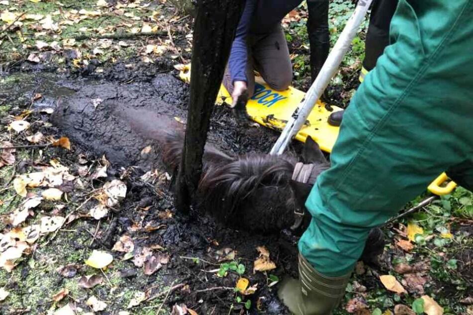 Das Tier war zunächst in einem Schlammloch gefangen.