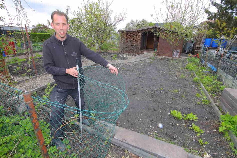 Ab Mai wieder zu pachten: Laubenpieper Holger Schönfeld (49) zeigt die  beräumte Scholle, wo der Messie hauste. Langsam kämpft sich das Grün zurück.