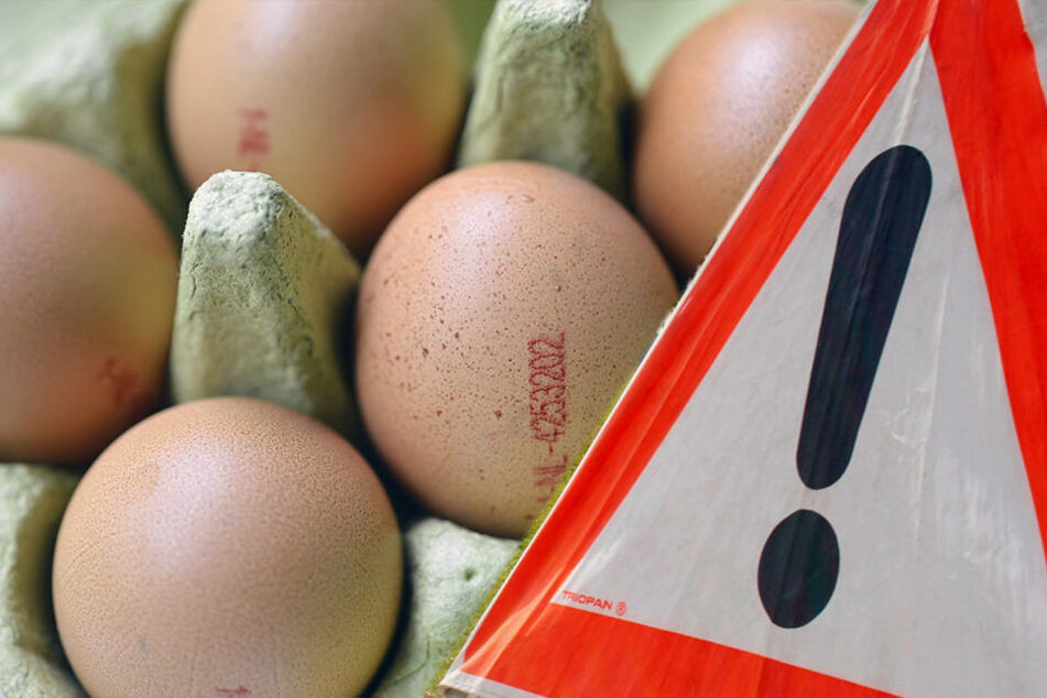 Seuchen-Alarm! Wurden kontaminierte Eier auch nach Sachsen geliefert?