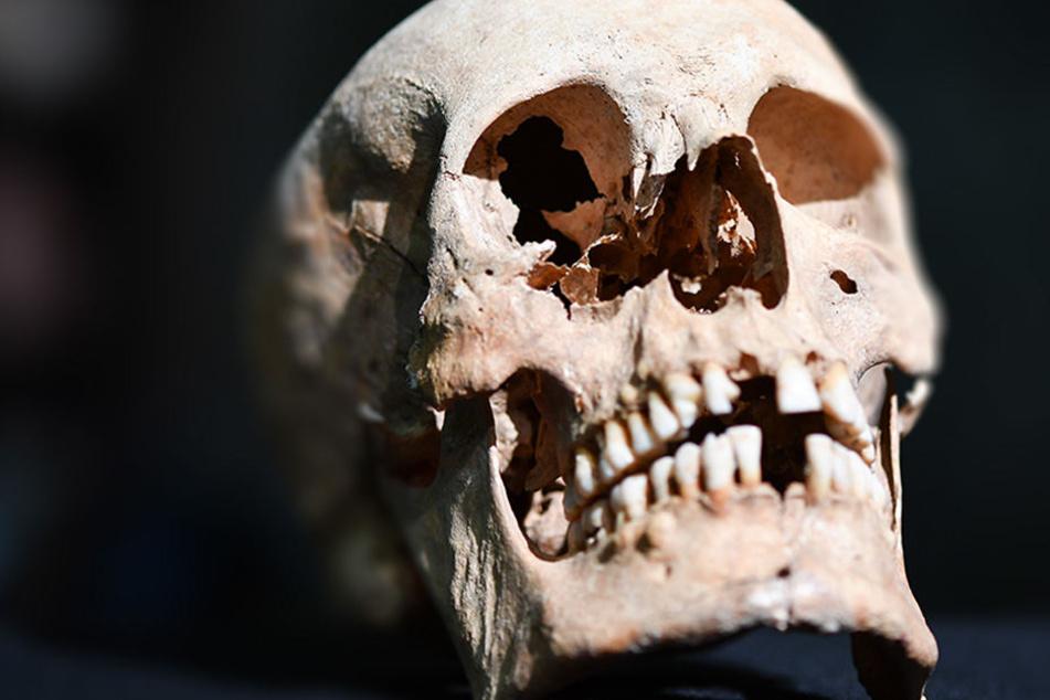 ...und täglich grüßt der menschliche Schädel in Zühlsdorf. (Symbolbild)