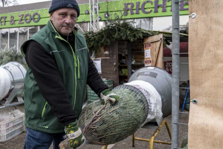 Steffen Uhlig (53) hat beim Gartenfachmarkt Richter Premium-Christbäume im Angebot.