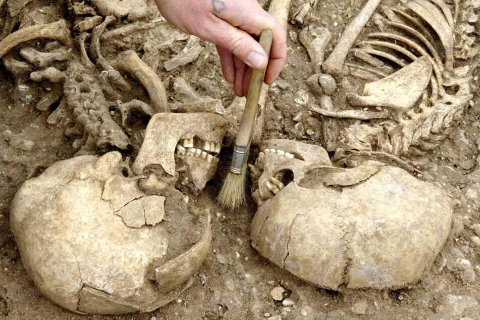 Zwei Schädel seien so dicht beieinander, dass sich die Gebisse berührten. (Symbolbild)