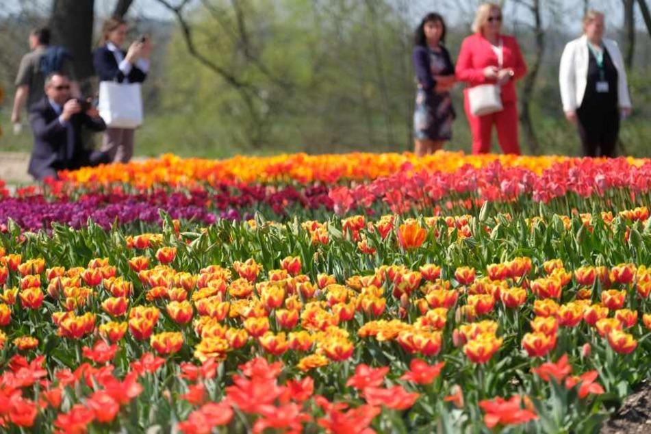 Die sächsische Landesgartenschau lockte rund 400.000 Besucher an.