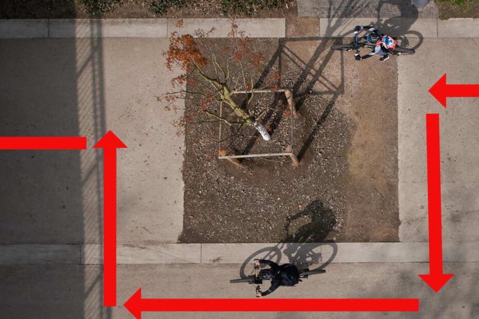 Eine Stadt rätselt: Warum steht hier mitten auf dem Gehweg ein Baum?