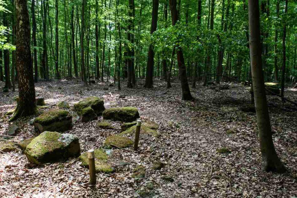 2000 Jahre alt! Archäologen machen unglaublichen Fund im Wald