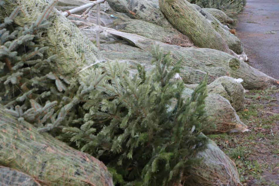 Wie die Bäume abtransportiert wurden, ist unklar. (Symbolbild)