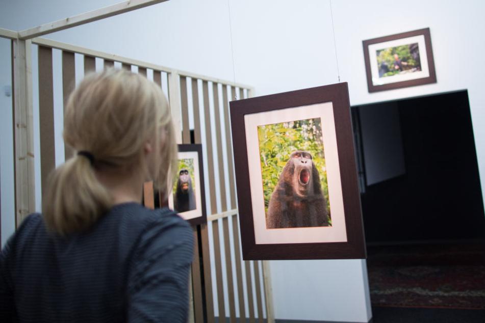 2015 wurde eine Reihe seiner Bilder bei einer Ausstellung in Düsseldorf gezeigt.