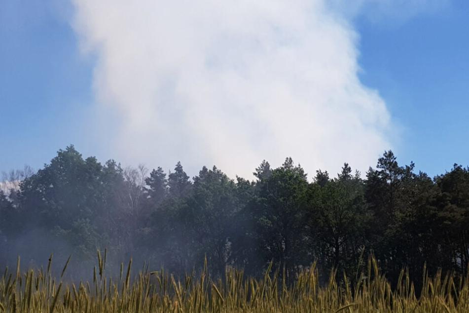 Der Rauch über dem Wald war weithin zu sehen.