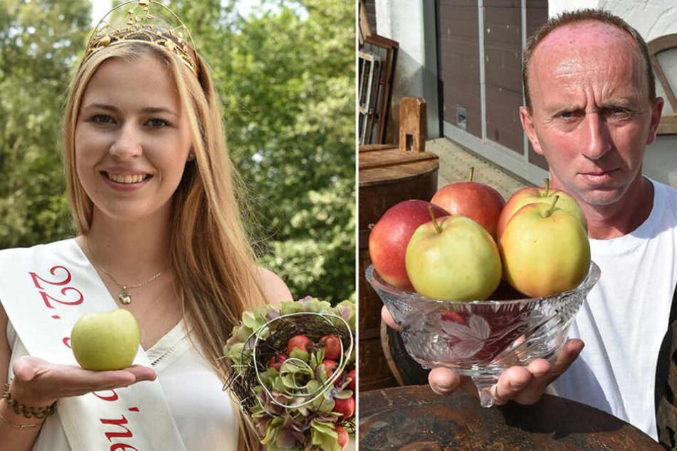 Marko Steidel will die Krone der amtierenden Apfelkönigin Antonia Liese.