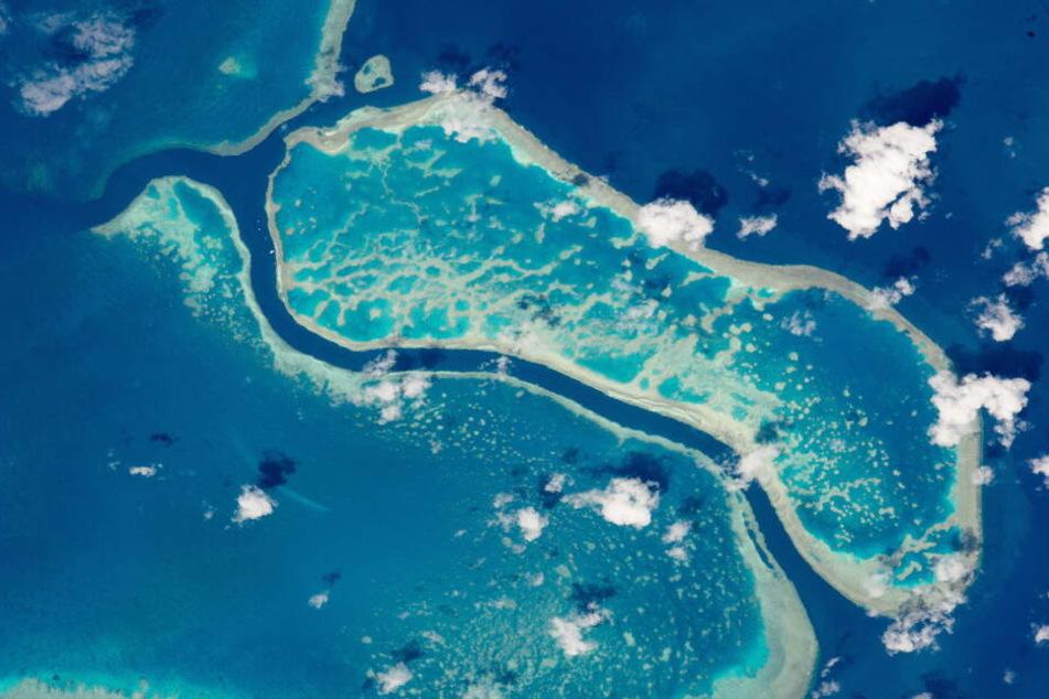 Im Great Barrier Reef kam es bereits öfter zu Hai-Attacken.