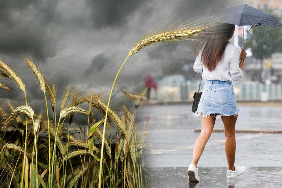 Hundertjähriger Kalender: So besch... wird's Wetter 2019