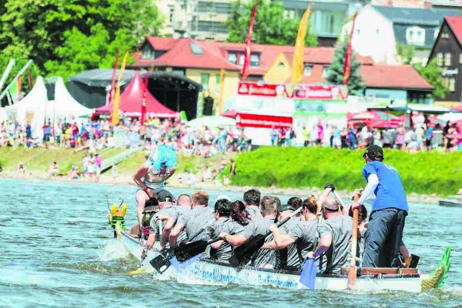 Dresden: Ende einer langen Tradition: Drachenboote nicht mehr beim Elbhangfest!