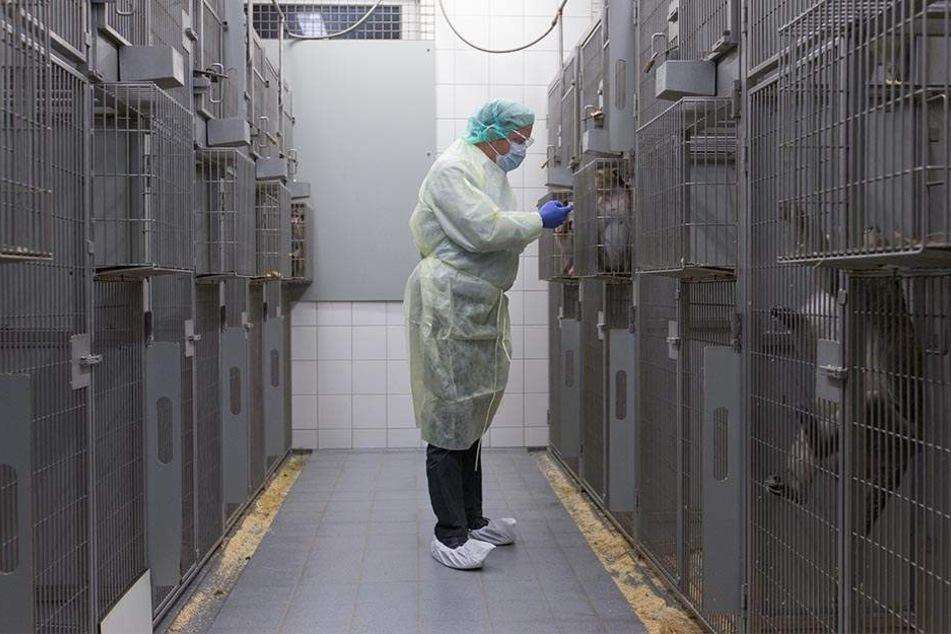 An der Universität Münster werden zu Forschungszwecken Tierversuche durchgeführt.