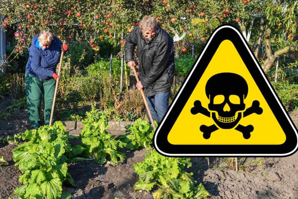 In den Gärten darf kein Gemüse mehr angebaut werden. Auch das Wasser aus den Brunnen ist verseucht (Symbolbild).