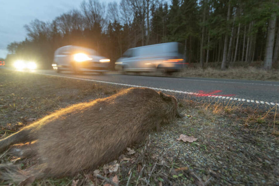Zu einem Wildunfall kam es am Donnerstagmorgen kurz hinter dem Ortsausgang Bad Berka in Richtung Blankenhain.