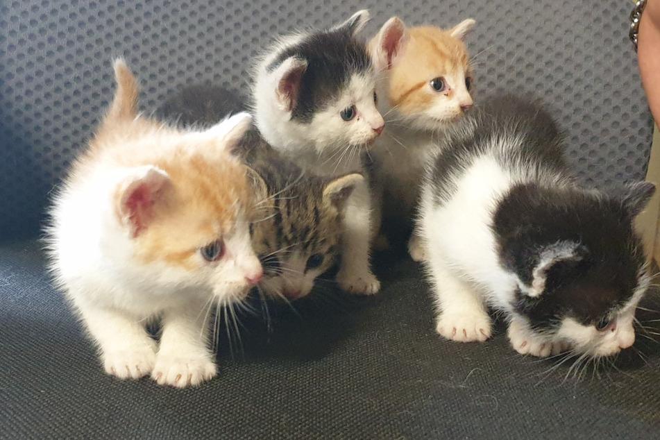Wer kennt diese Kätzchen? Lkw-Fahrer rettet ausgesetzte Tierbabys