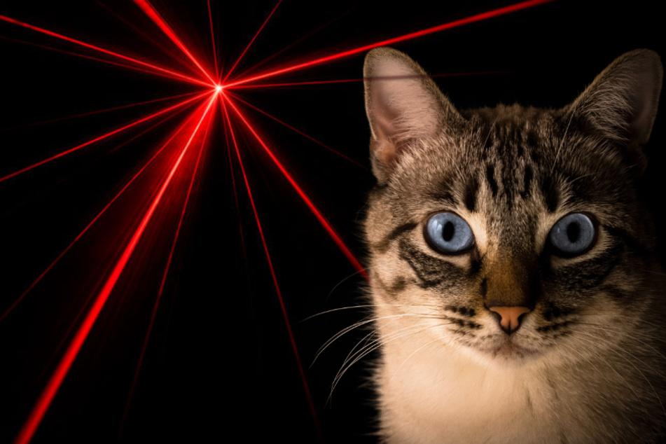 Katzen lieben Laserpointer, doch das kann ins Auge gehen!