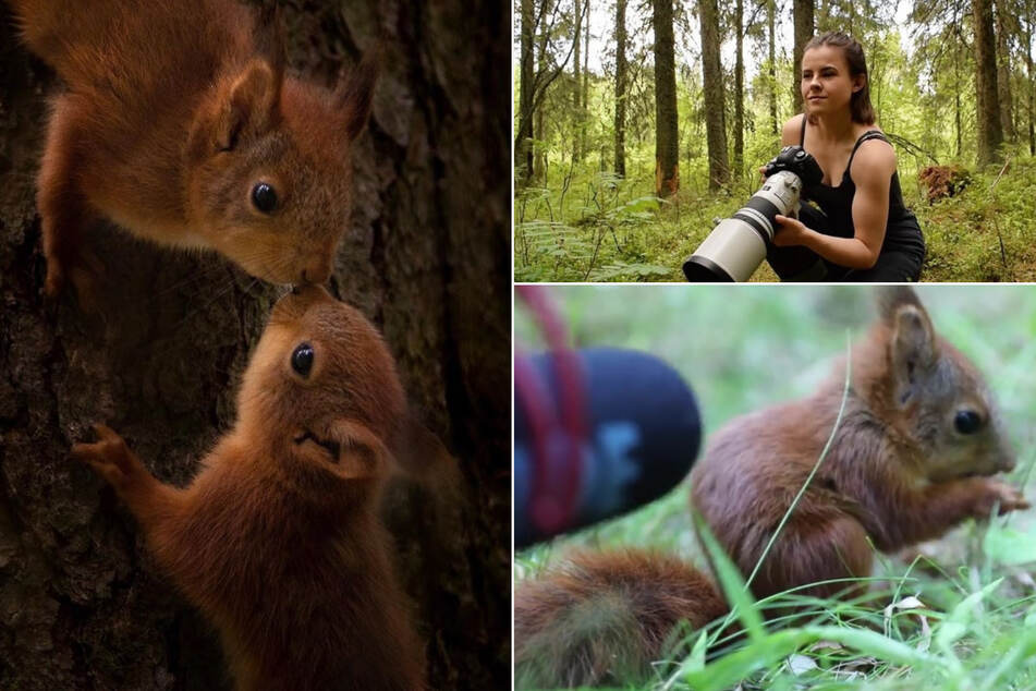 Süßes Video geht viral! Frau gelingt spektakuläre Aufnahme von futterndem Baby-Eichhörnchen