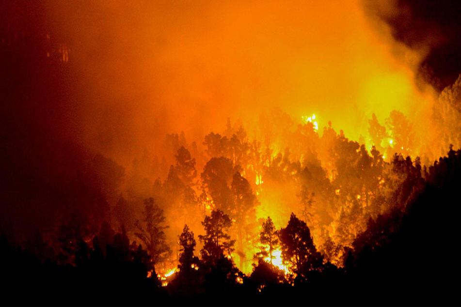 Im August 2016 zerstörte ein Großfeuer einen Wald auf der Insel La Palma in Spanien.
