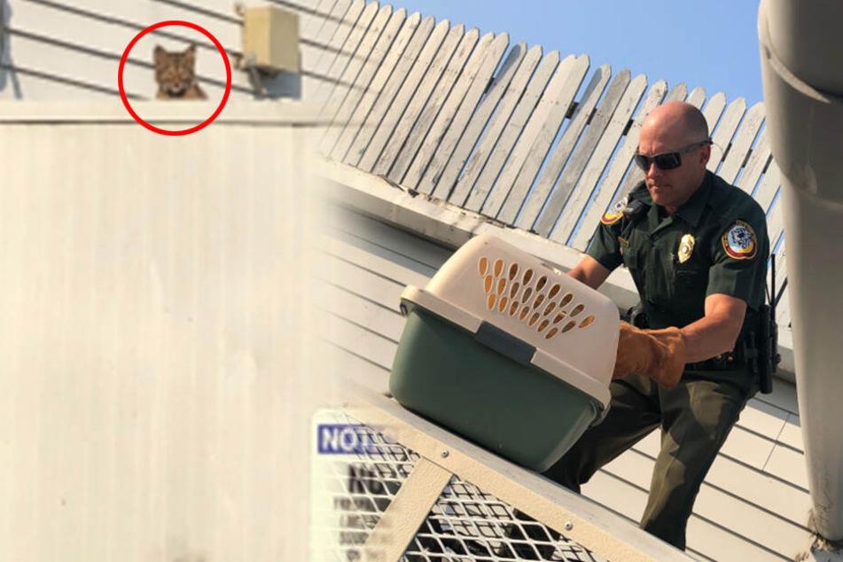 "Polizist will ""Katze"" retten, doch merkt dann geschockt, was er wirklich jagt"