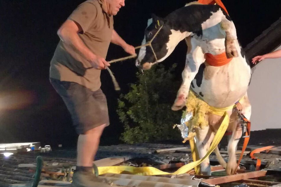 Per Kran und Schlaufen gelang die Rettung der Milchkuh.