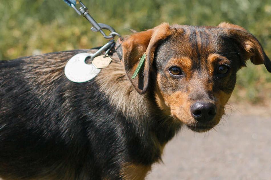 Der Mann hatte dem Hund die Leine um den Hals gelegt und ihn daran durch die Luft gedreht. (Symbolbild)