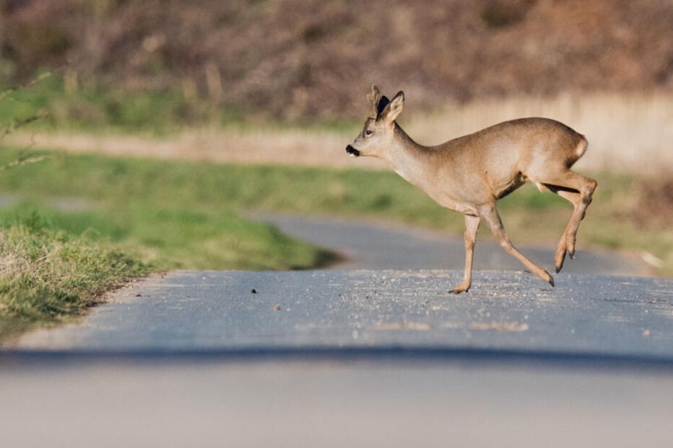 Die oberbayerische Regierung will die Wälder vor Verbiss durch die Tiere schützen. (Symbolbild)