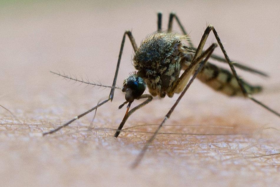 Selbst lange Kleidung schützt vor einem Mückenstich nicht.