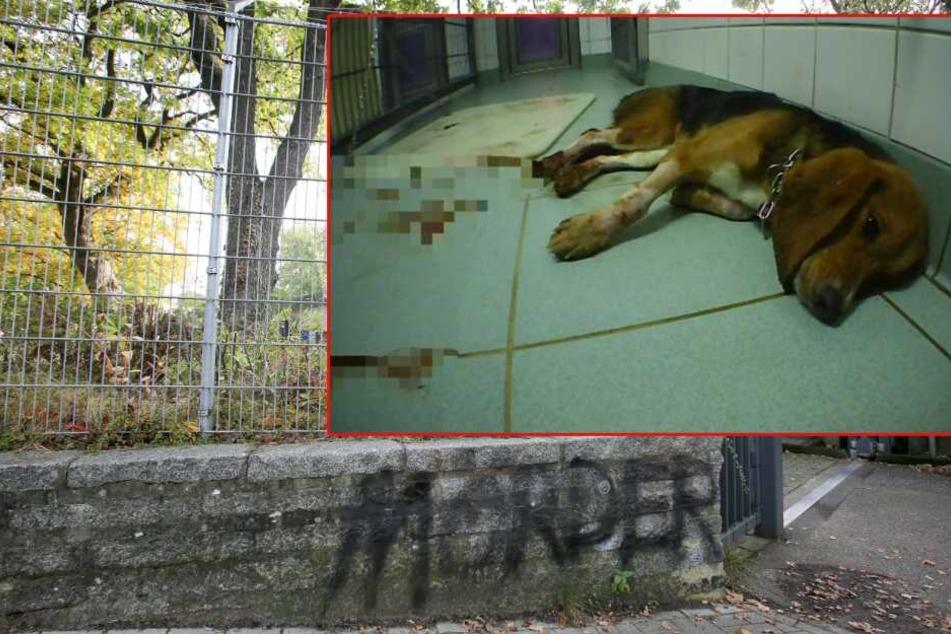 Grausame Tierversuche: Todeslabor kommt erneut unter die Räder