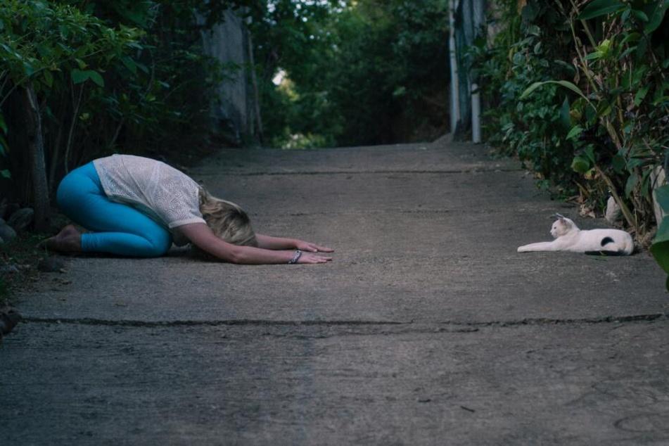 Ein menschlicher Katzen-Sklave. Oder doch nicht?