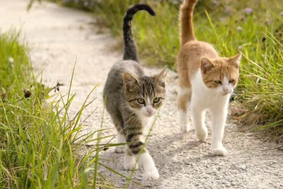 Katzen in Köln: Hausarrest oder Kastration