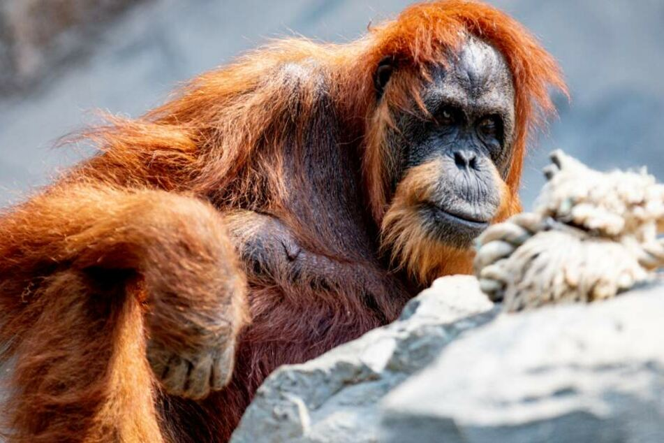Hagenbecks Tierpark boomt! So viele Besucher wie seit Jahren nicht mehr
