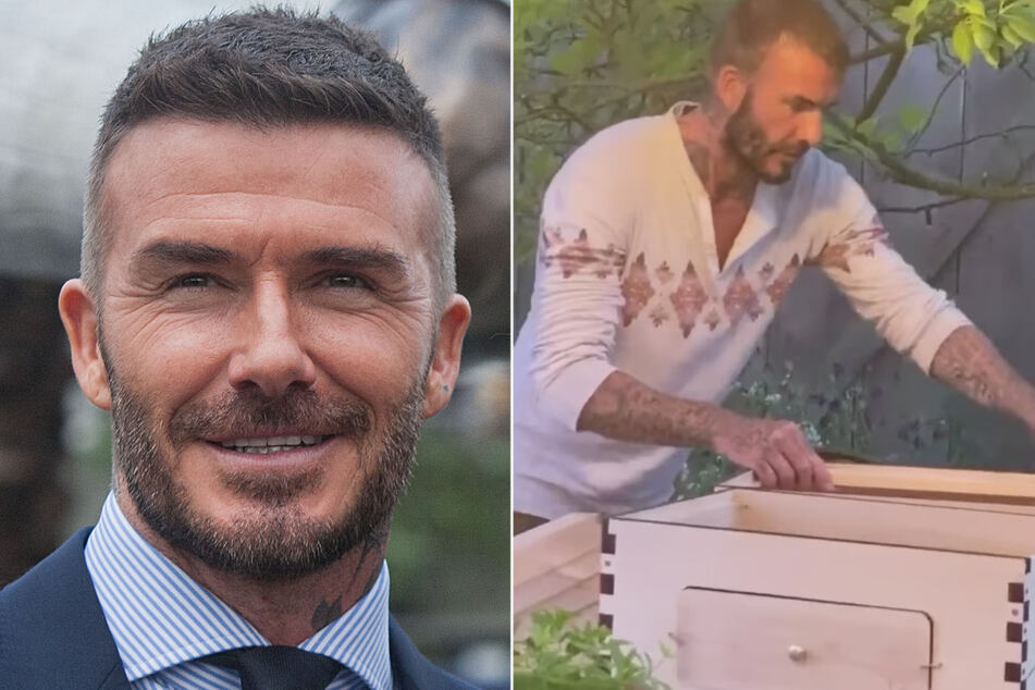 """Soccer legend David Beckham became """"obsessed"""" with beekeeping during lockdown, according to a source."""
