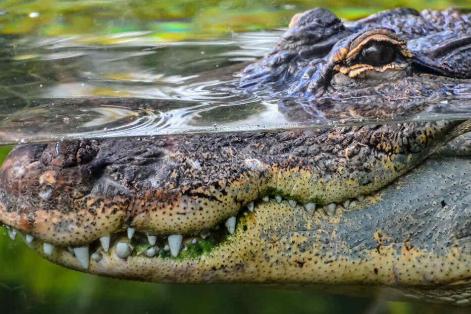 In einem Fluss lauerte die Gefahr, die Sidik Kamseno das Leben kostete. (Symbolbild)