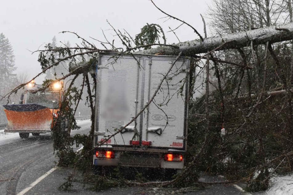 """Am Feldberg im Schwarzwald stürzte ein Baum wegen """"Burglind"""" auf einen Metzgerei-Lastwagen."""