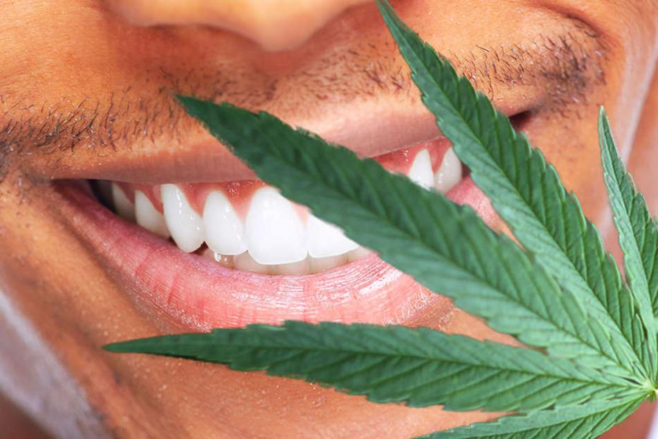 Cannabis? Für einen 17-jährigen handelte es sich nur um ein Mittel gegen seine Zahnschmerzen.