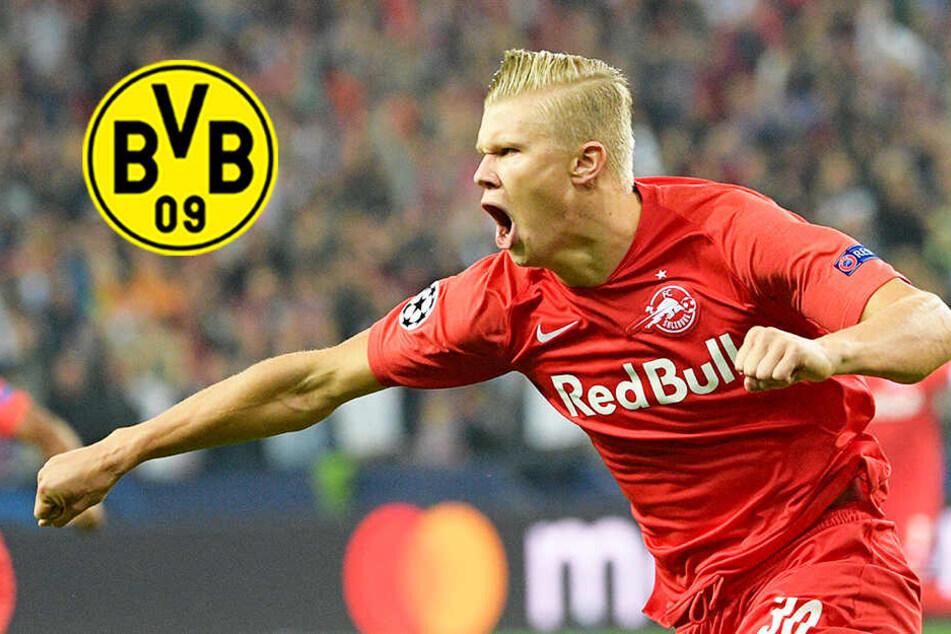 """BVB soll an """"norwegischer Bestie"""" Haaland dran sein: Darum wäre ein Transfer sinnvoll"""