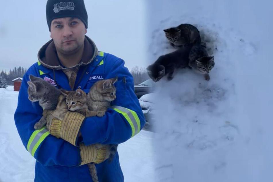 Angefrorene Kätzchen mit heißem Kaffee gerettet
