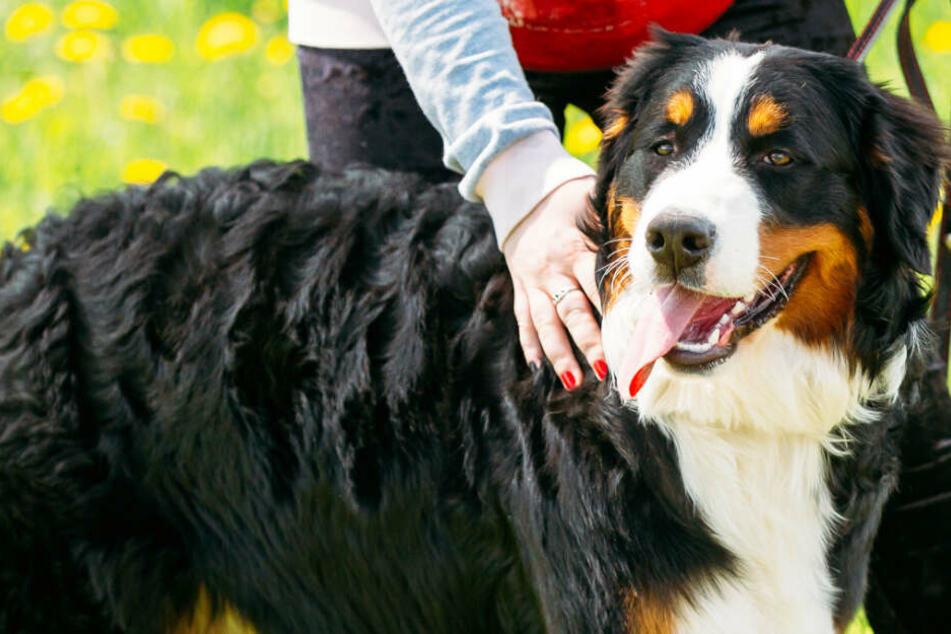 Die Zahl der Hunde in Hamburg steigt und damit auch die Steuereinnahmen. (Symbolbild)