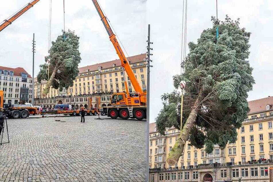 Kein Witz! Rathaus sucht jetzt einen Weihnachtsbaum
