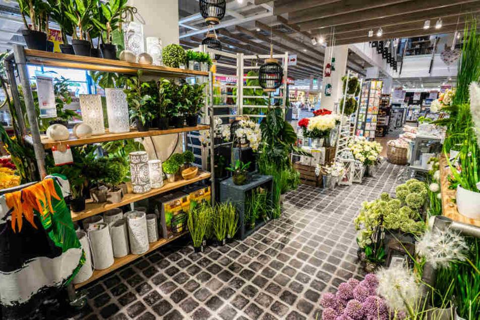 Auch eine wunderschöne Pflanzenabteilung gehört zum Möbelhaus in Wentorf.
